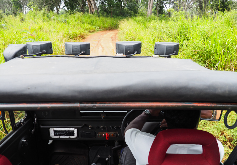Notre Jeep en safari au Sri Lanka