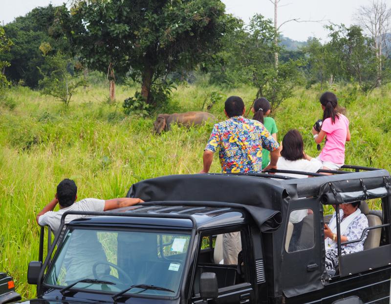 Safari en jeep au Sri Lanka