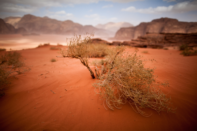 Wadi Rum. Photo par Eric Montfort, Creative Commons.