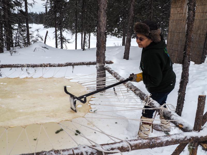 Anna nous apprend à préparer la peau d'orignal dans le camp culturel cri.