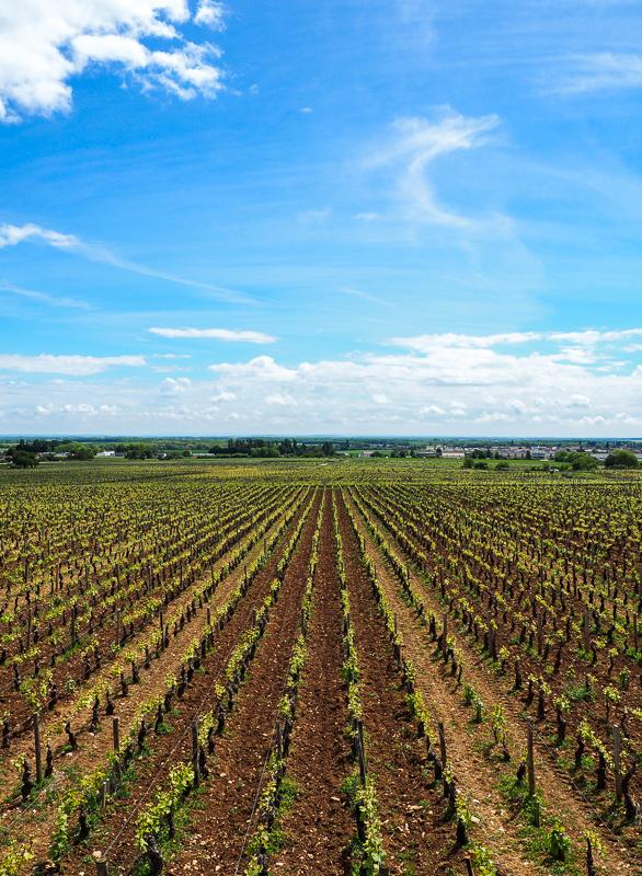 Vignobles de la Côte d'Or.