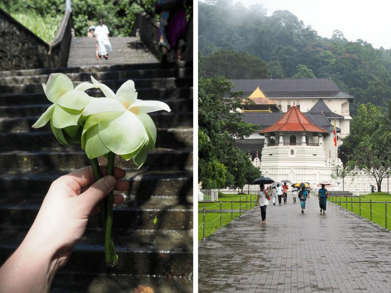 Fleurs de lotus et temple de la dent au Sri Lanka