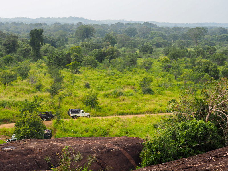Parc national au Sri Lanka pour faire un safari