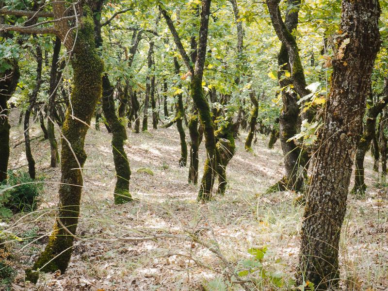 Forêt d'arbres tordus vue en randonnée à Météora