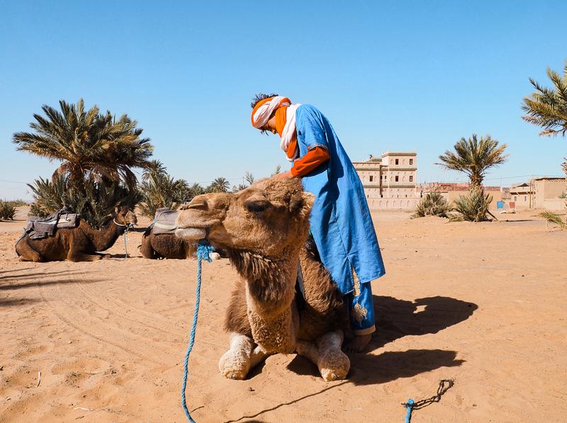 Guide de la compagnie Mouhou Tour préparant les chameaux