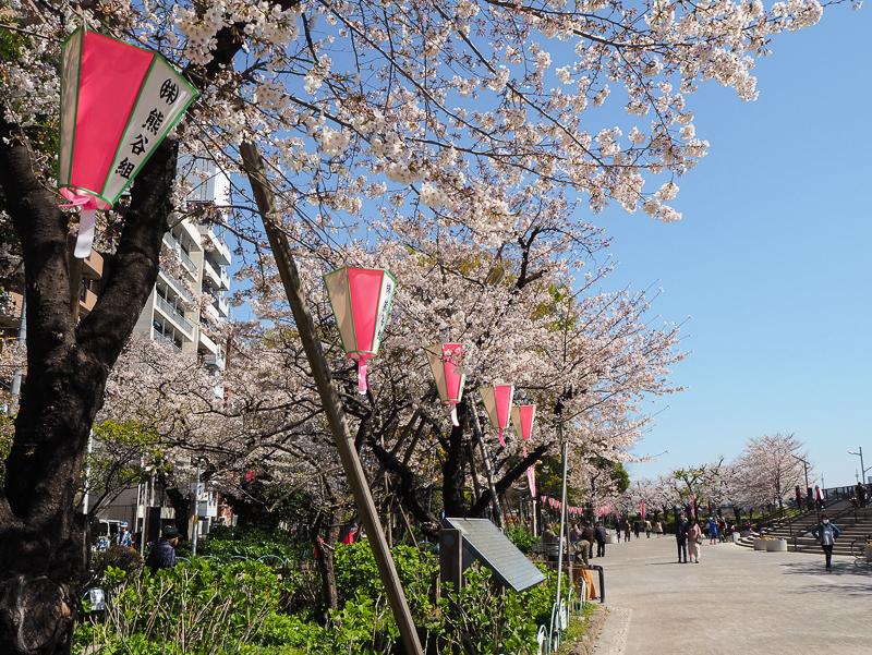 Balade dans le parc de Sumida de Tokyo durant la saison des cerisiers en fleurs