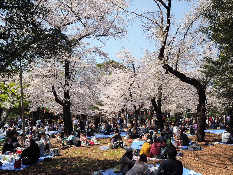 Des Tokyoïtes font un hanami dans le parc Ueno lors de la saison des sakura à Tokyo