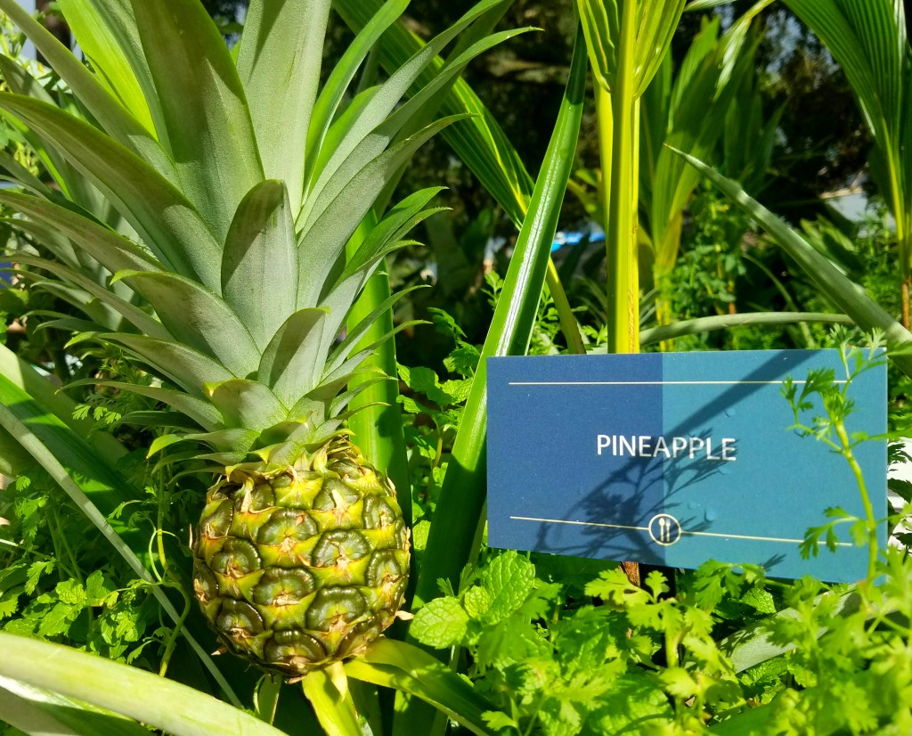 epcot-food-wine-pineapple