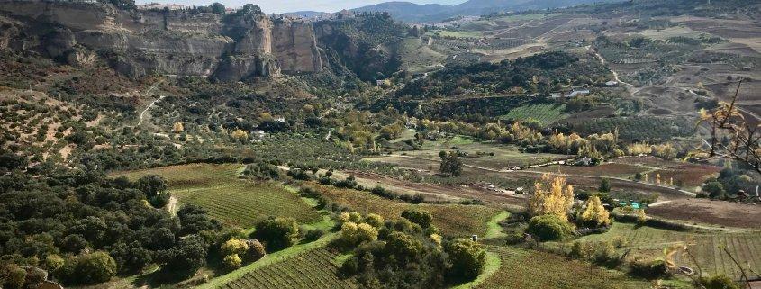 Vineyards of Ronda