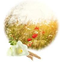 Lampe Berger Harvest Season - Anns Fine Gifts - Houston, Texas