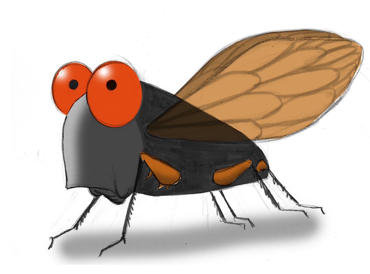 Cicada McConnell