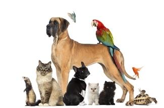 garde d'animaux de compagnie