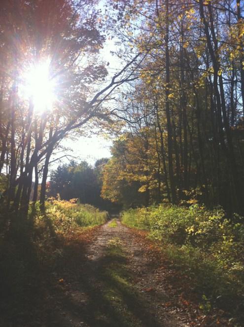 forest road gray ny