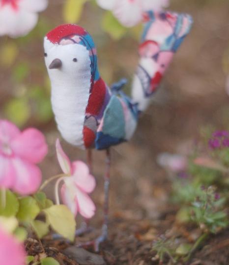 abby's bird