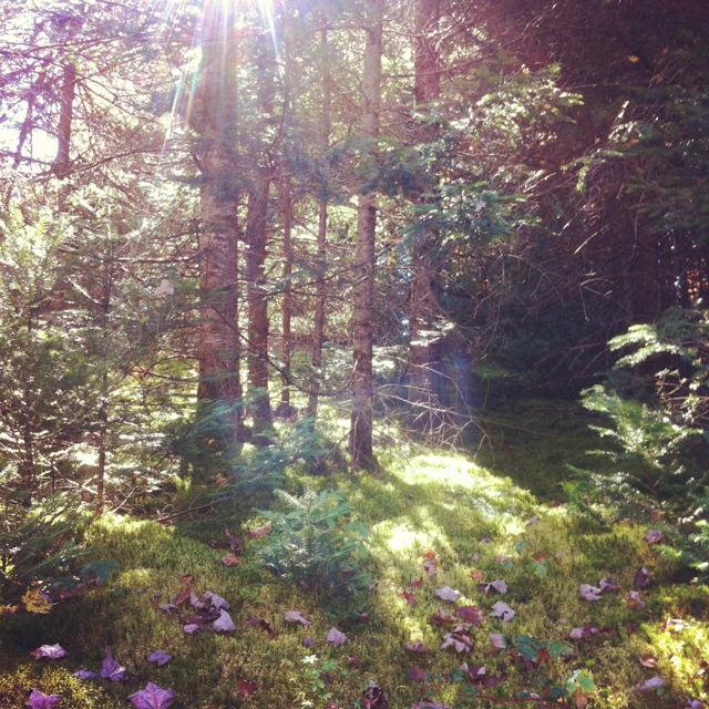 fairy path