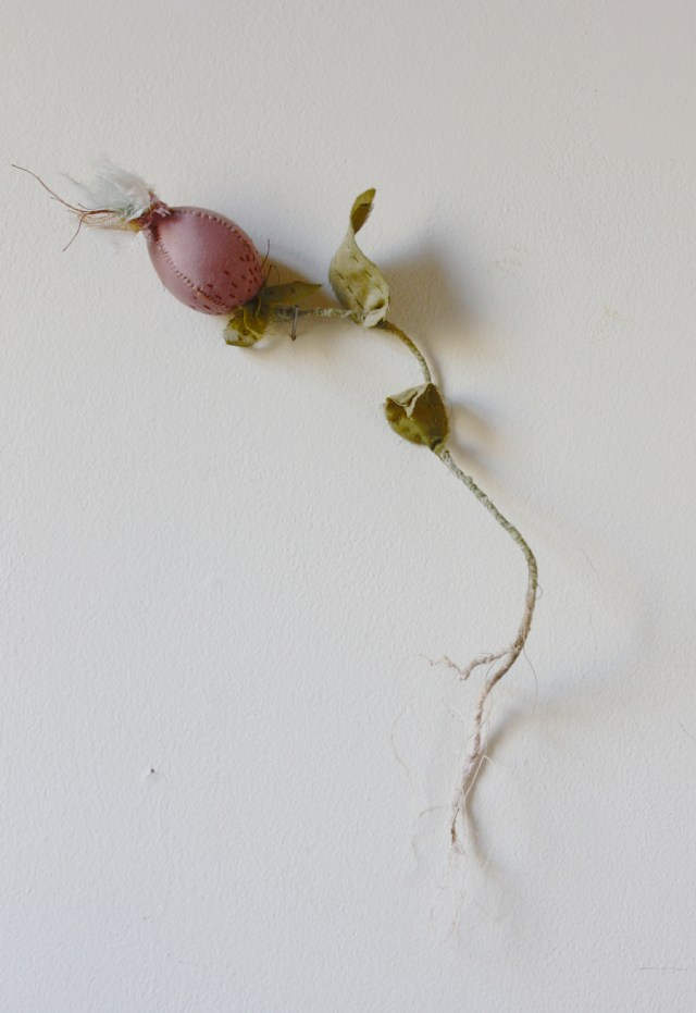 botanical experiment : seedpod
