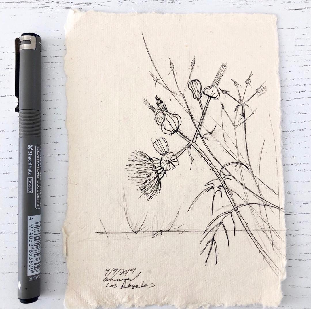 ann wood : drawing