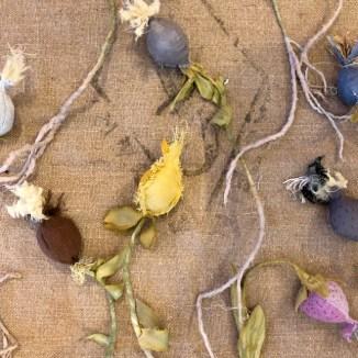 botanical workshop images