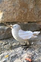 songbird_france