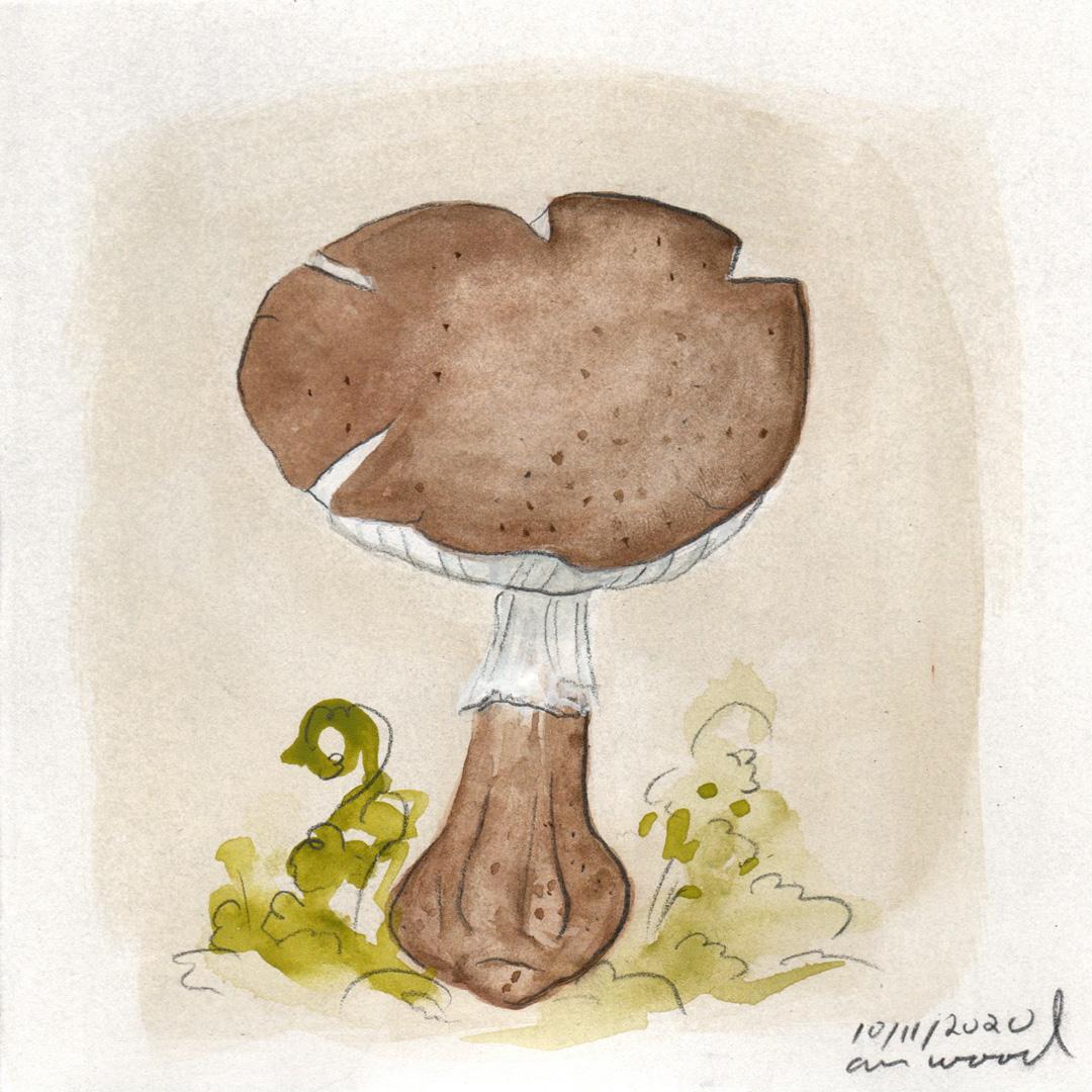 small painting : mushroom
