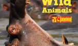 LIVE : National Geographic Animals