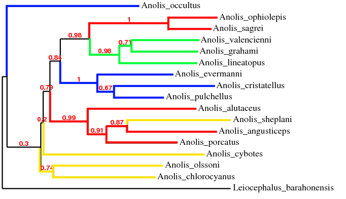 Anole Phylogeny Activity for High School/College Level