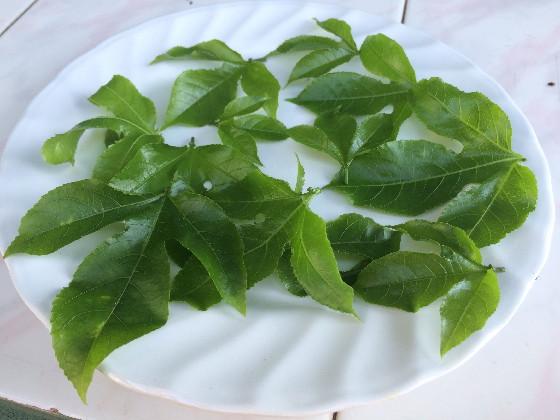 passion fru kola sambol leaves