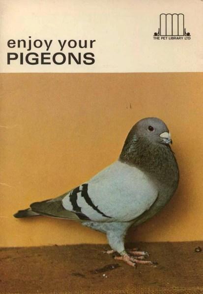 enjoy pigeons