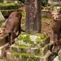 deer in temple