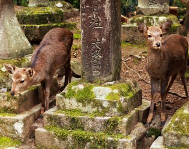 deer in temple