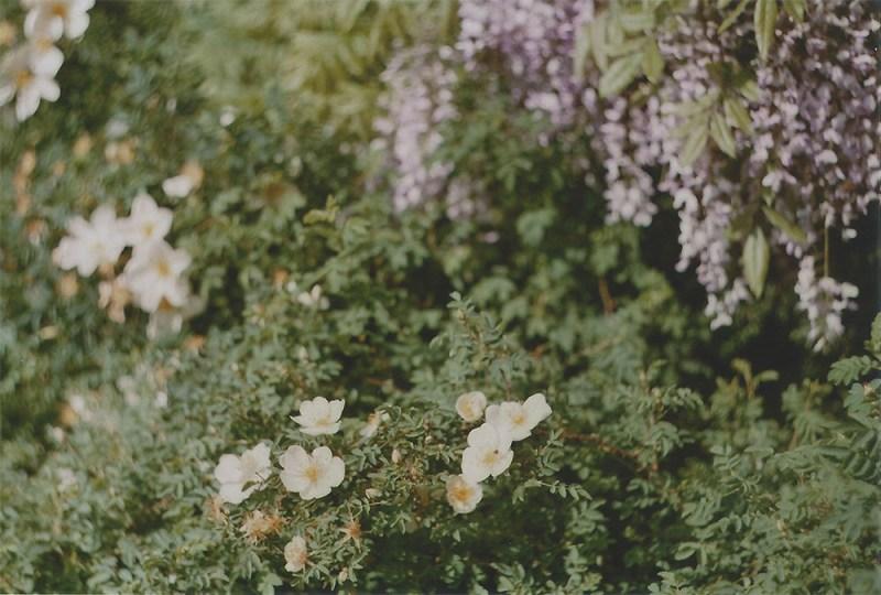 Botanische tuin - wisteria