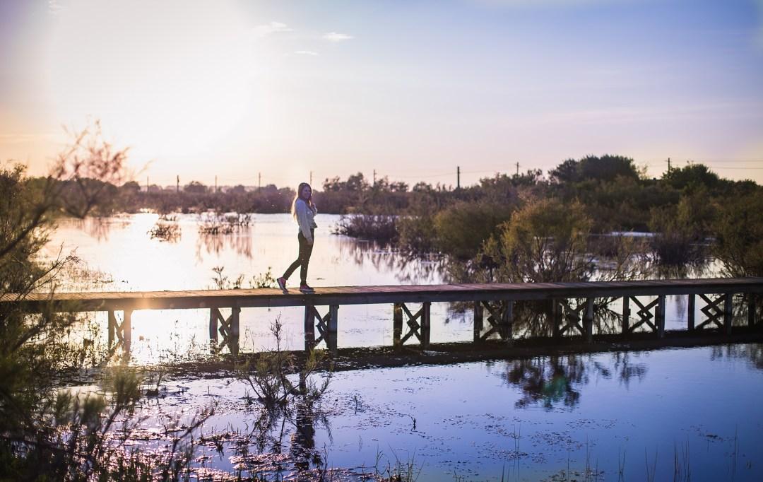 apus delta dunarii