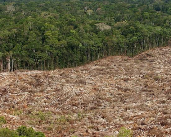 Amazzonia, disboscamento diminuito 43% in settembre