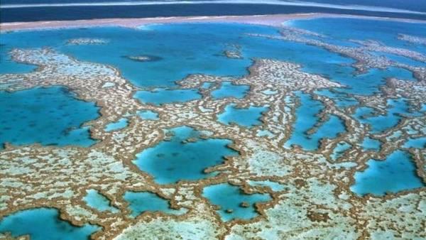 Sos barriera corallina Australia causa inquinamento e clima