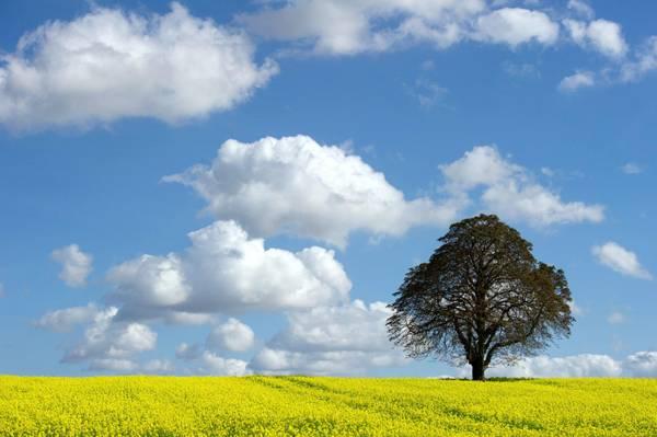 Un albero in un campo