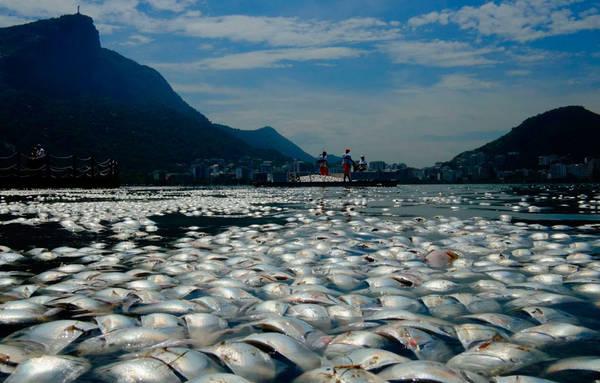 Tonnellate di pesci morti nel lago per gare canottaggio a Olimpiadi Brasile 2016