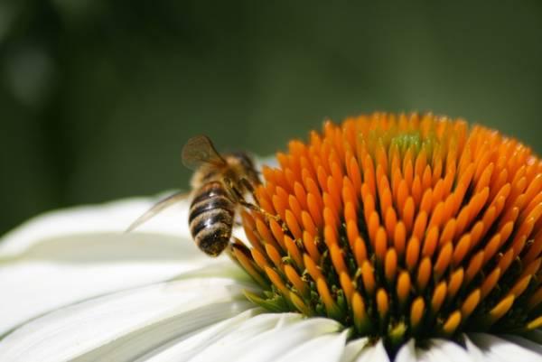 In ex chiesa arnia con 50mila api
