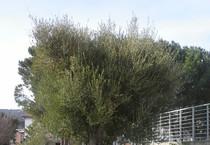 Sardegna Ansa It