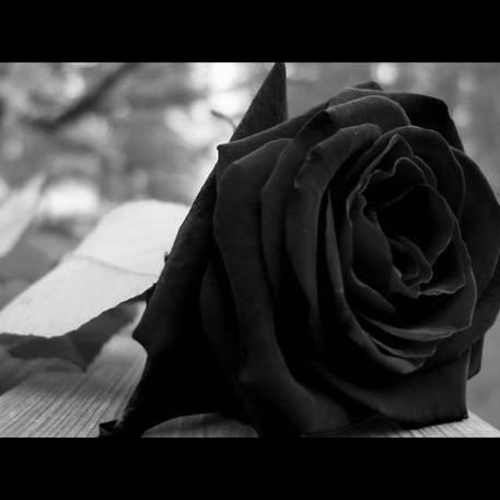 La rosa nera in segno di lutto postata su Facebook da Maria Concetta Riina in ricordo del padre, Toto' © Facebook