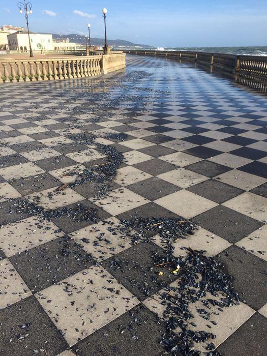 Invasione piccole meduse a Livorno  Toscana  ANSAit