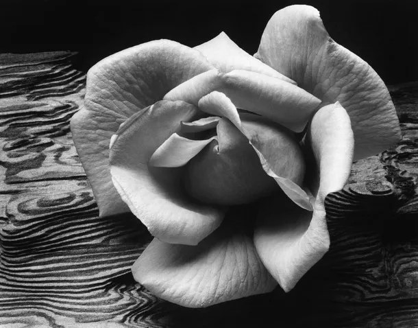 Rose and Driftwood from Ansel Adams