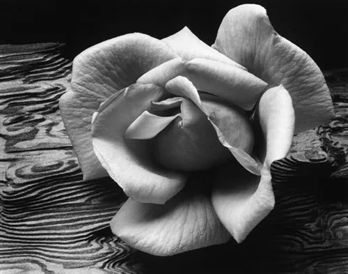 Rose and Driftwood, 1932 by Ansel Adams
