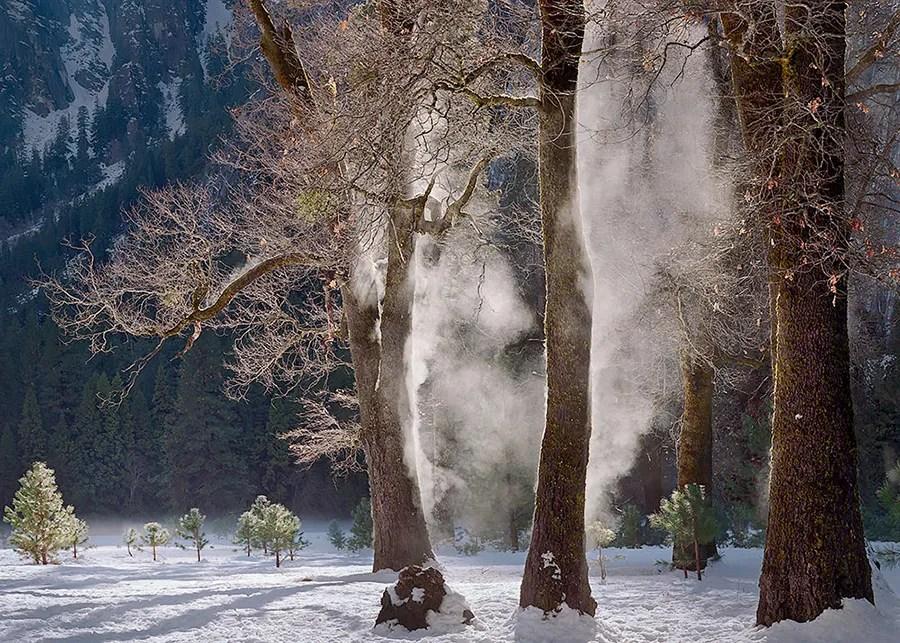 Mist Steaming from Oaks, Yosemite