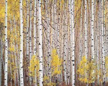 Aspen Grove Colorado ChristopherBurkett