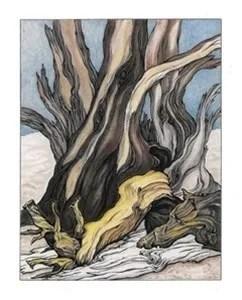 Della Taylor Hoss Art Prints Yosemite