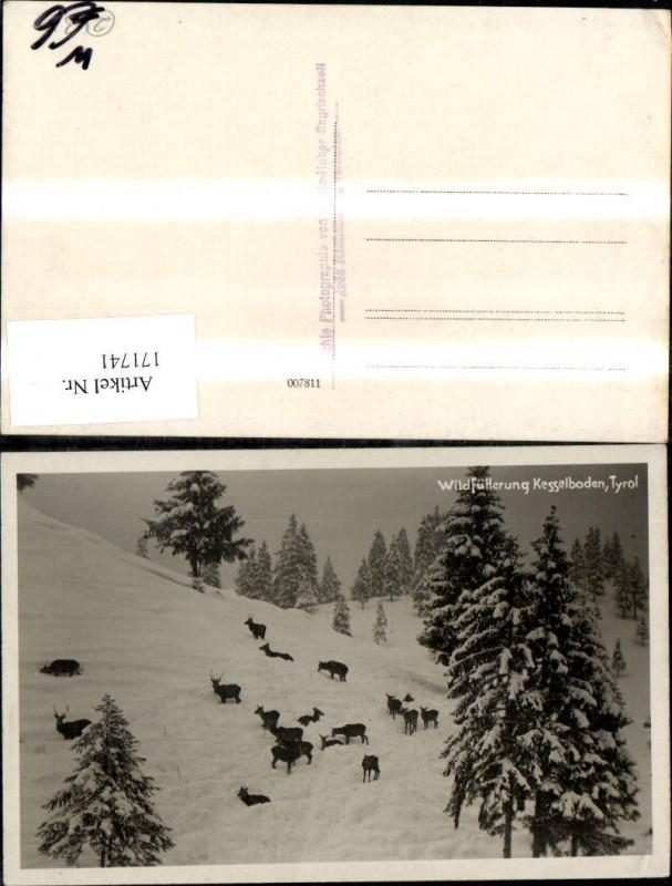 171741Foto Ak Wildftterung Kesselboden b Thiersee Wild Rehe Ansichtskarten sterreich Tirol