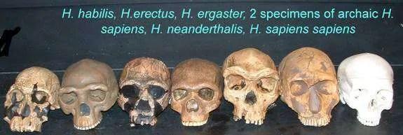 do not reject evolution