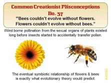 Creationist Misconceptions No. 37 - Bees & Flowers