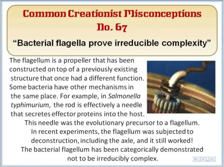 Creationist Misconceptions No. 67 - Flagella