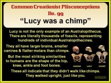 Lucy was a chimp